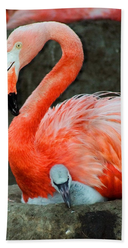 Bird Hand Towel featuring the photograph Flamingo And Baby by Anthony Jones
