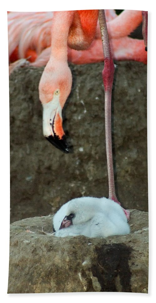 Pink Flamingo Bath Towel featuring the photograph Flamingo And Chick by Anthony Jones