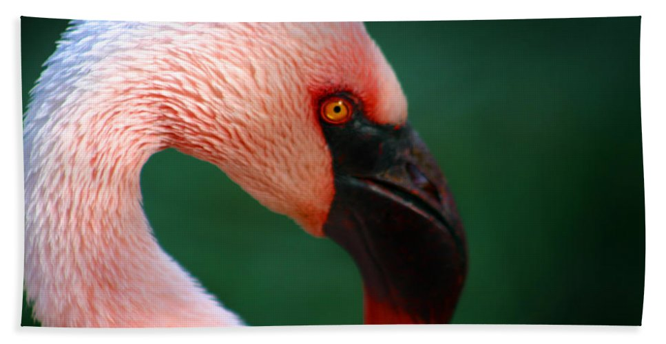 Flamingo Hand Towel featuring the photograph Flamingo by Anthony Jones