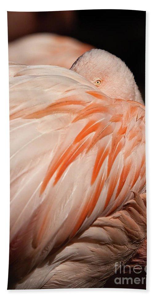 Pink Flamingo Bath Sheet featuring the photograph Flamingo by Doug Sturgess