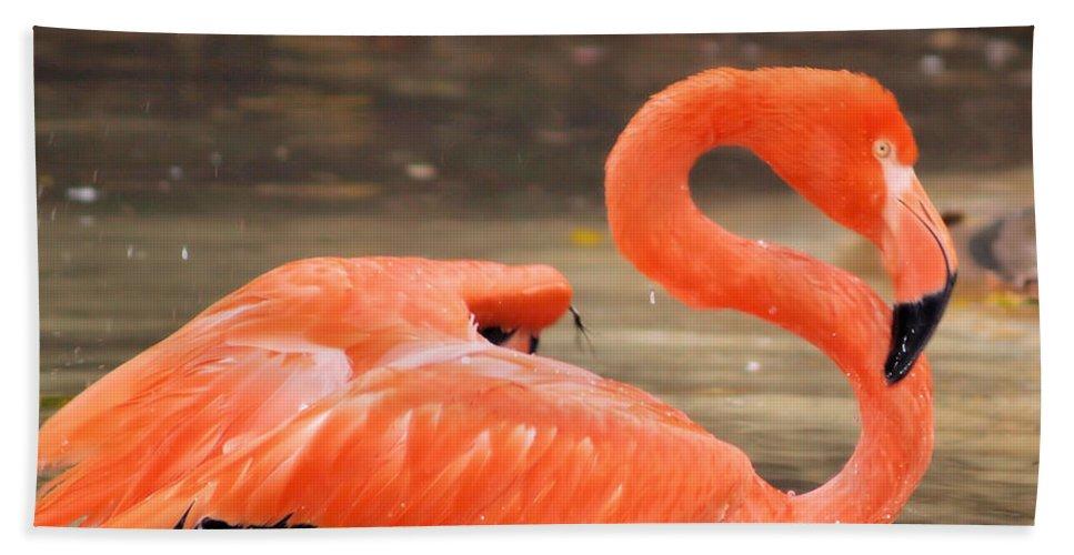 Flamingo Bath Sheet featuring the photograph Flamingo by Gaby Swanson