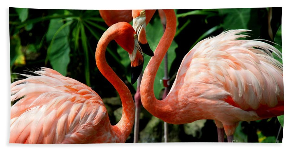 Pink Flamingo Hand Towel featuring the photograph Flamingo Heart by Barbara Bowen