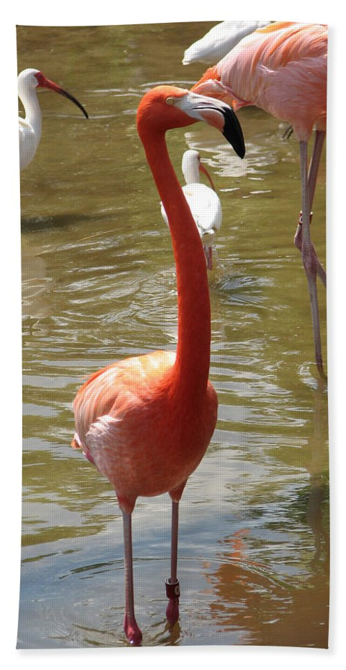 Flamingo Hand Towel featuring the photograph Flamingo II by Stacey May