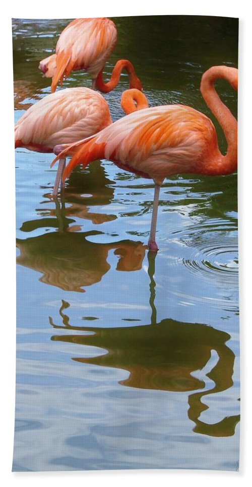 Flamingo Bath Sheet featuring the photograph Flamingo Reflections by Margaret Bobb