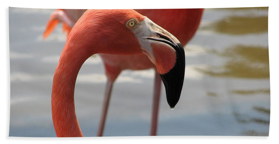 Flamingo Bath Sheet featuring the photograph Flamingo by Stacey May