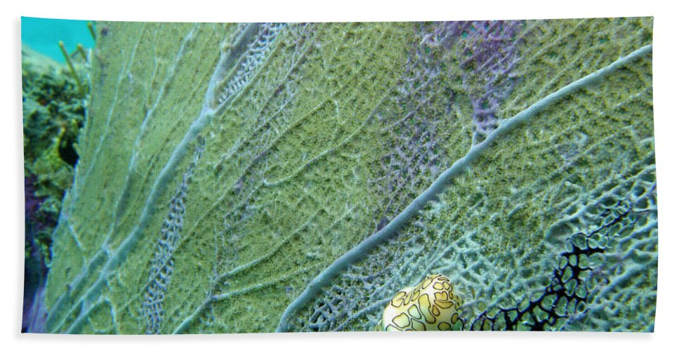 Ocean Bath Sheet featuring the photograph Flamingo Tongue by Kimberly Mohlenhoff