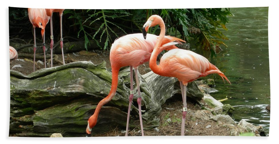 Flamingo Hand Towel featuring the photograph Flamingos by Carol Turner