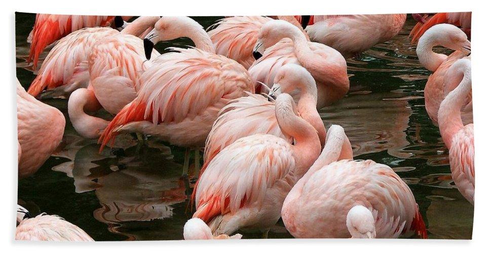 Pink Flamingo's Bath Sheet featuring the photograph Flaminigo's by Robert Meanor