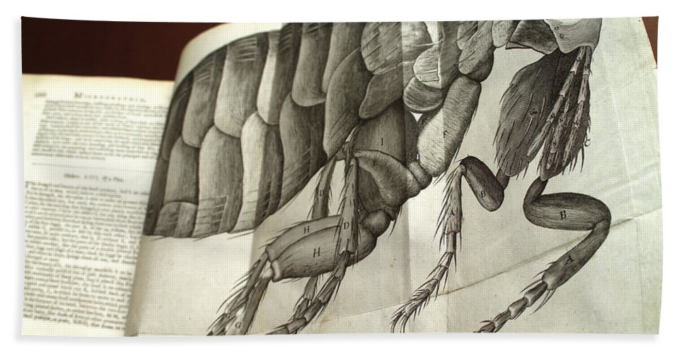 Animal Hand Towel featuring the photograph Flea From Robert Hookes Micrographia by Wellcome Images