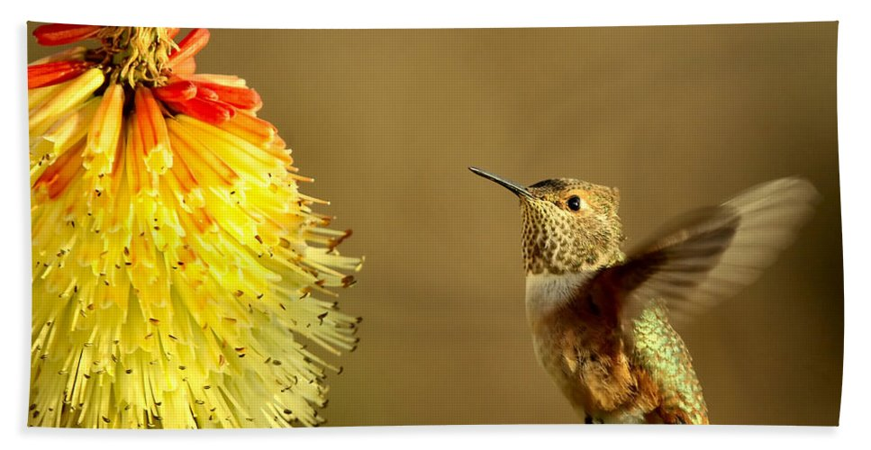 Hummingbird Bath Sheet featuring the photograph Flight Of The Hummer by Mike Dawson