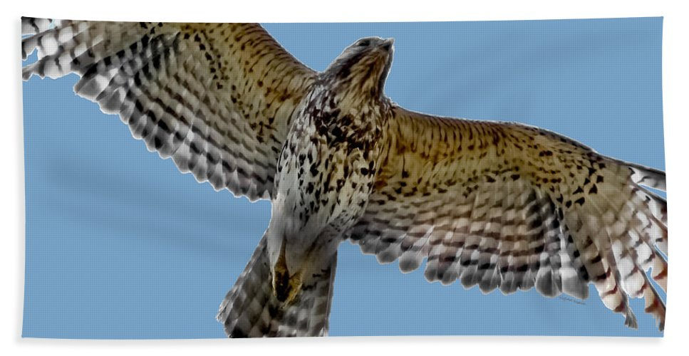 Hawk Hand Towel featuring the digital art Flight Of The Red Shouldered Hawk by DigiArt Diaries by Vicky B Fuller