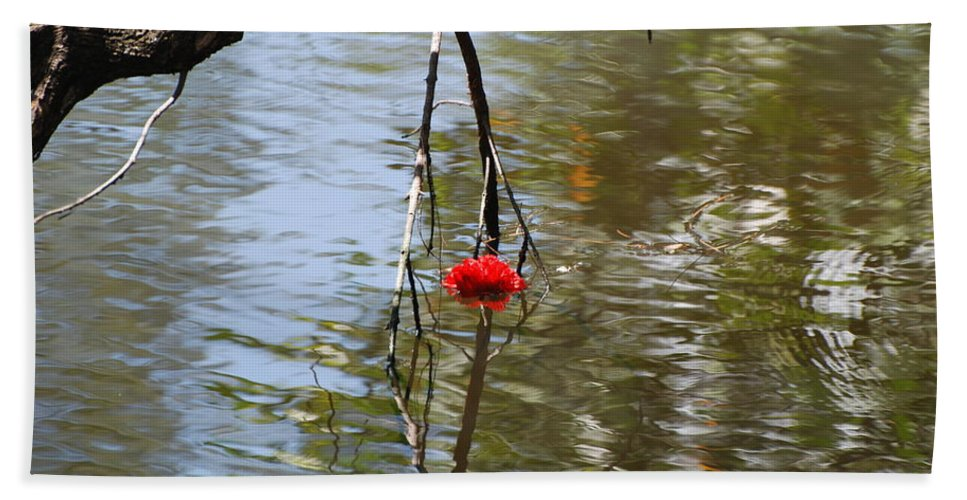 Water Hand Towel featuring the photograph Floating Flower by Rob Hans