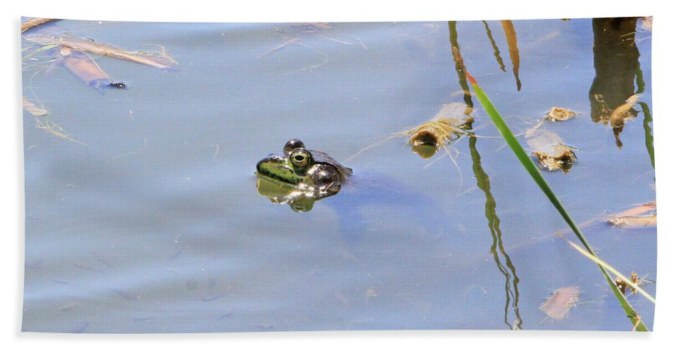 American Bullfrog Bath Sheet featuring the photograph Floating Frog by Shoal Hollingsworth