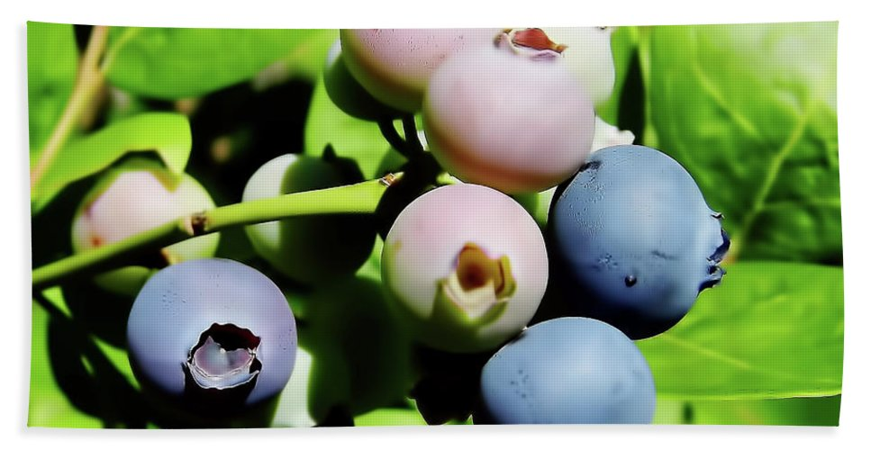 Blue Berries Bath Towel featuring the photograph Florida - Blueberries - On The Bush by D Hackett
