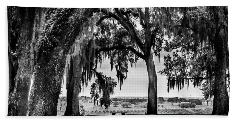 Hand Towel featuring the photograph Florida Interior From Bok Gardens by Susan Molnar