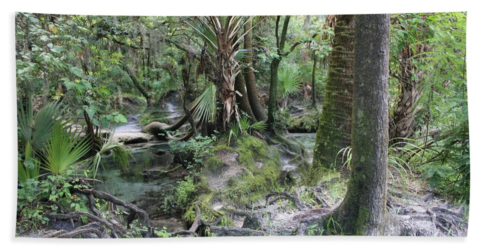 Florida Landscape Hand Towel featuring the photograph Florida Landscape - Lithia Springs by Carol Groenen