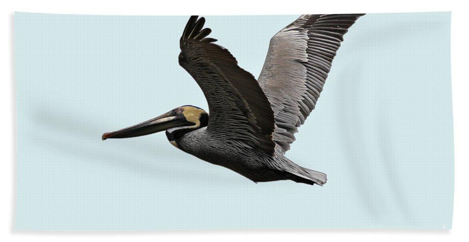 Bird Bath Sheet featuring the photograph Florida Pelican In Flight by Deborah Benoit