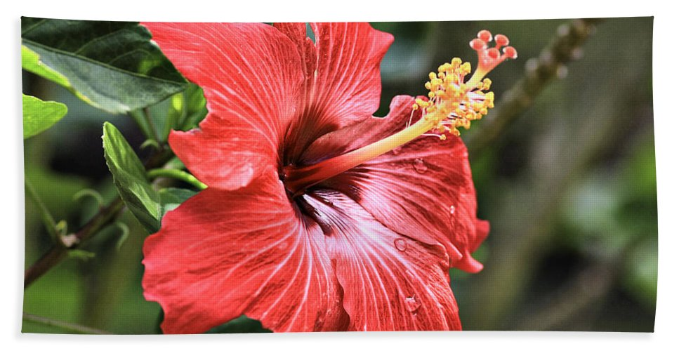 Flower Hand Towel featuring the photograph Florida Red by Deborah Benoit