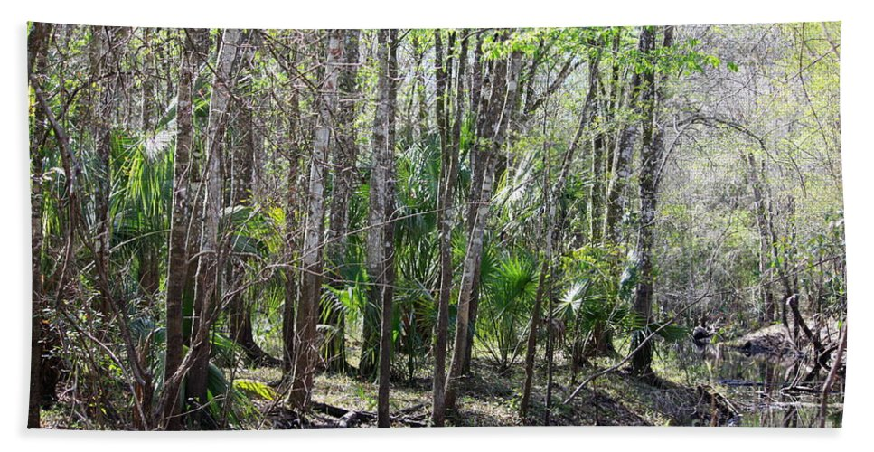 Florida Landscape Bath Sheet featuring the photograph Florida Riverbank by Carol Groenen
