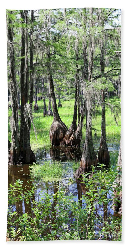 Trees Hand Towel featuring the photograph Florida Swamp by Carol Groenen
