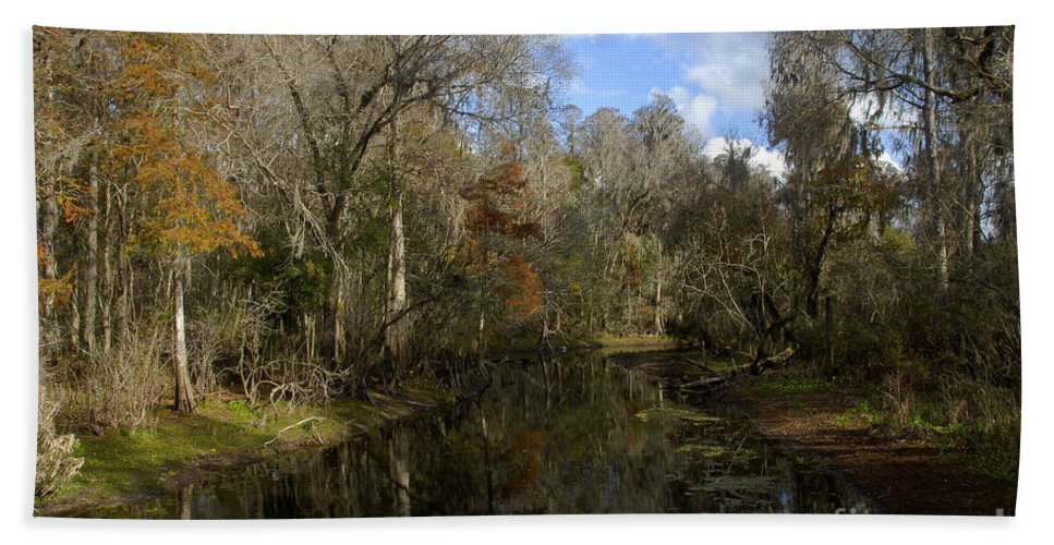 Wetlands Bath Towel featuring the photograph Florida Wetlands by David Lee Thompson