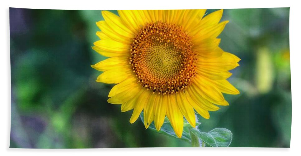 #sunflower Hand Towel featuring the photograph Flower #43 by Albert Fadel