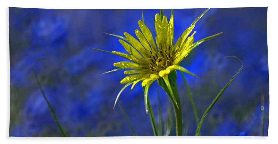 Flower Hand Towel featuring the photograph Flower And Flax by Heather Coen