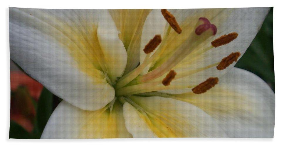 Flower Bath Towel featuring the photograph Flower Close Up 1 by Anita Burgermeister