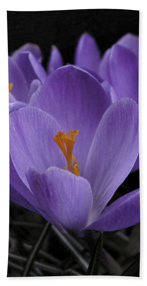 Flowers Bath Sheet featuring the photograph Flower Crocus by Nancy Griswold