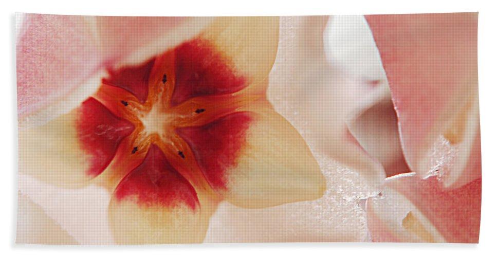 Flower Bath Sheet featuring the photograph Flower Hoya 3 by Jill Reger