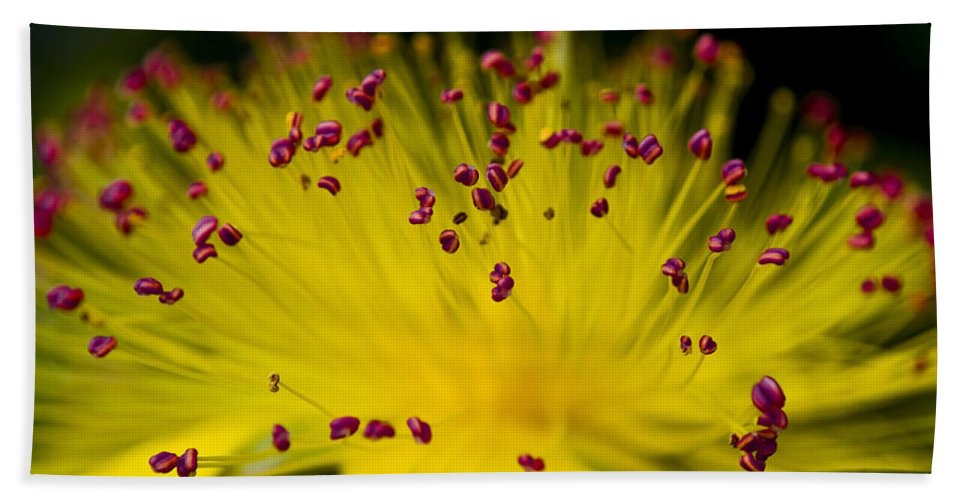 Pink Bath Sheet featuring the photograph Flower In Macro by Svetlana Sewell