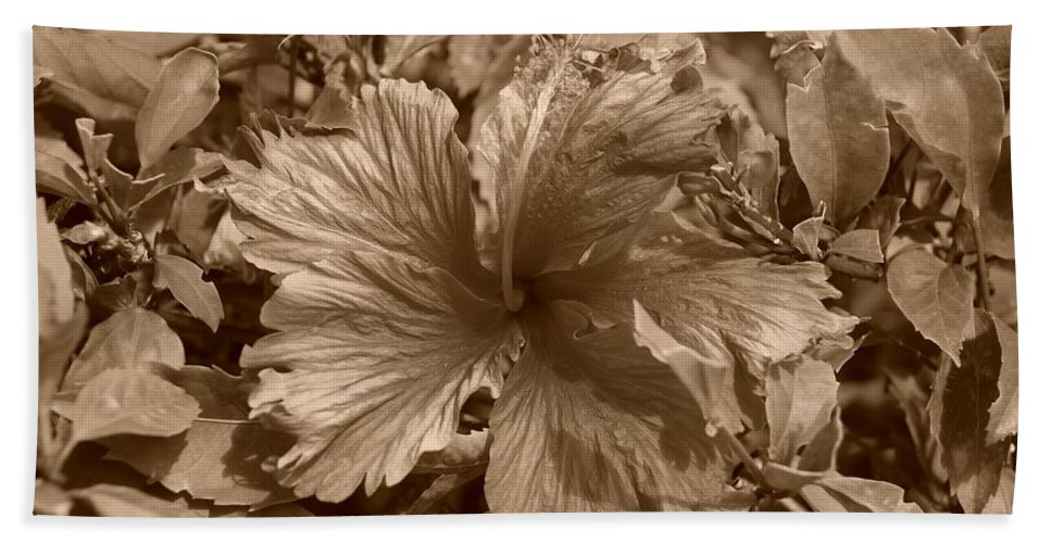 Sepia Bath Sheet featuring the photograph Flower In Sepia by Rob Hans
