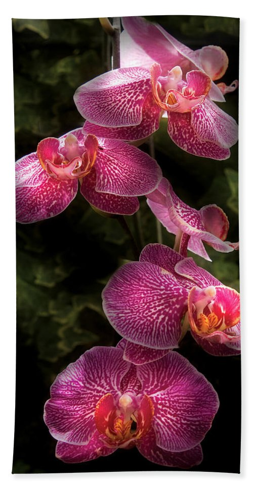 Phalaenopsis Bath Sheet featuring the photograph Flower - Orchid - Phalaenopsis - The Cluster by Mike Savad
