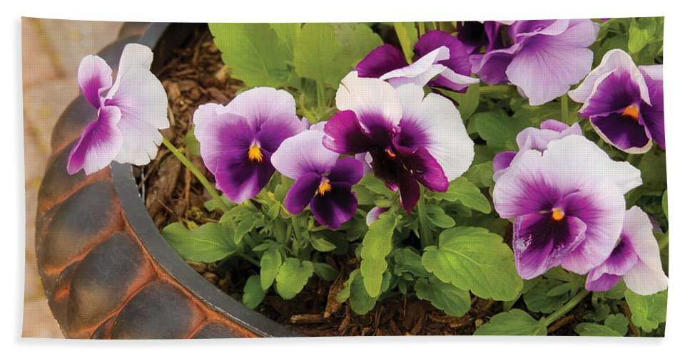 Pansy Bath Sheet featuring the photograph Flower - Pansy - Purple Pansies by Mike Savad