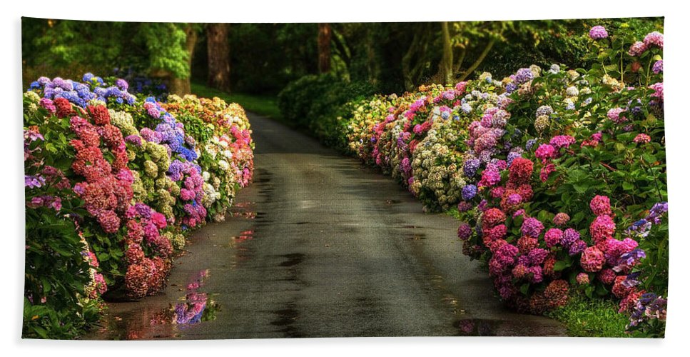 Road Hand Towel featuring the photograph Flower Road by Svetlana Sewell