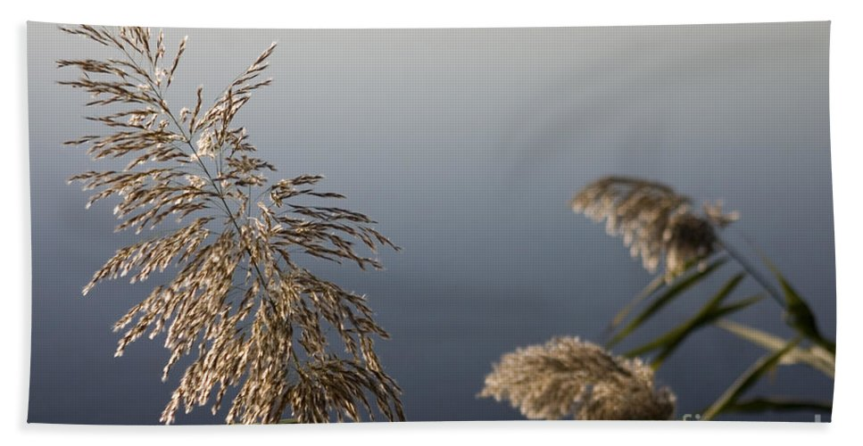 Nature Bath Towel featuring the photograph Flowering Cane Plant by Nahum Budin