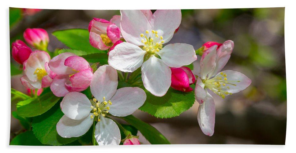 Cherry Blossom Festival Hand Towel featuring the photograph Flowering Cherry Tree Blossoms by SR Green