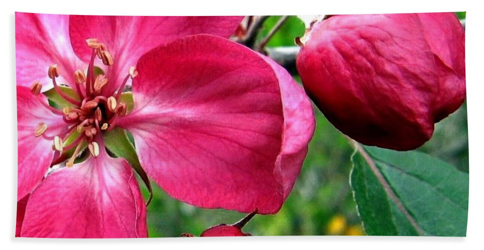 Flowering Crab Apple Hand Towel featuring the photograph Flowering Crab Apple by Will Borden
