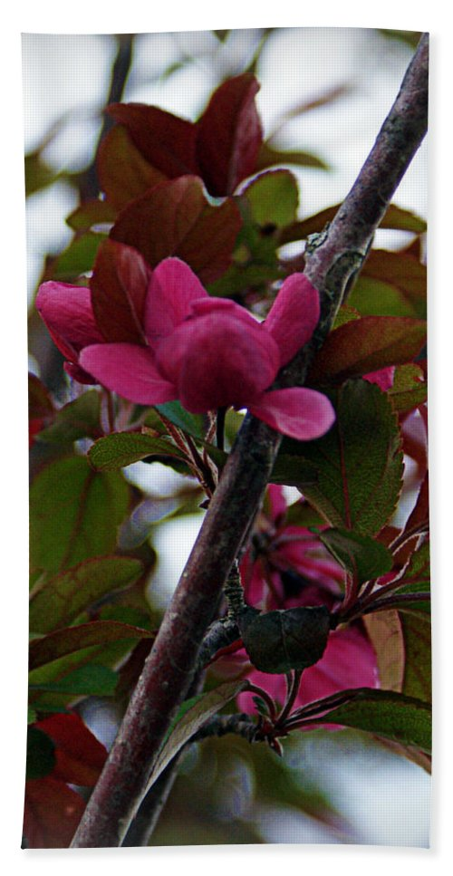 Flowers Bath Sheet featuring the photograph Flowering Crabapple by Cricket Hackmann