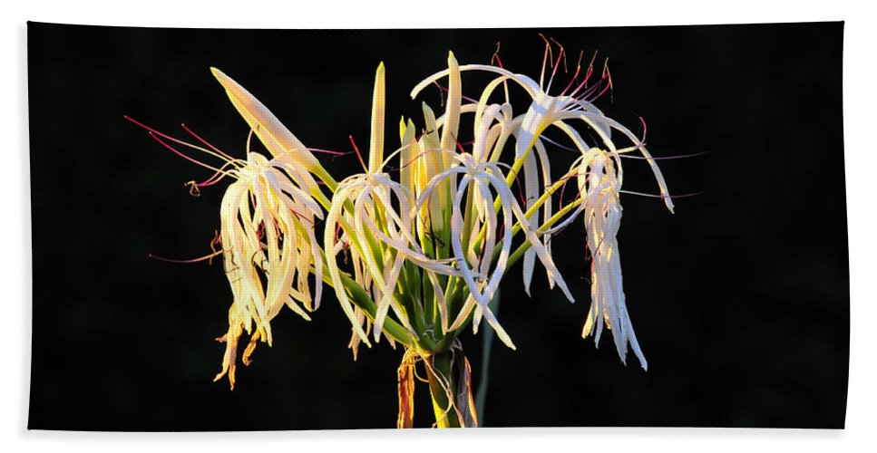 Flower Hand Towel featuring the photograph Flowering In Florida by David Lee Thompson