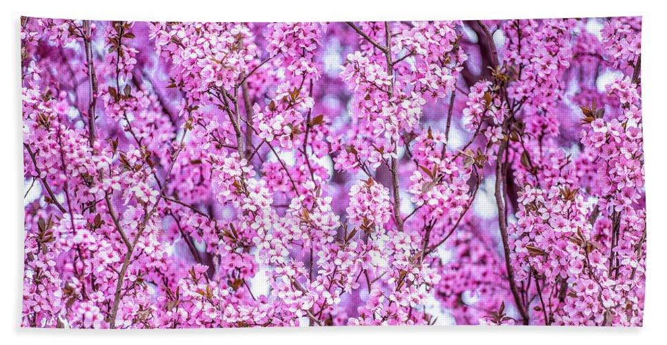 Flower Bath Sheet featuring the photograph Flowering Plum Blossoms. by Greg Chapel