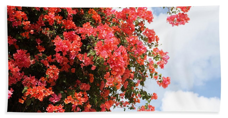 Hawaii Bath Sheet featuring the photograph Flowering Tree by Nadine Rippelmeyer