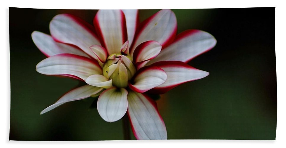 Flowers Hand Towel featuring the photograph Flowers 66 by Ben Yassa