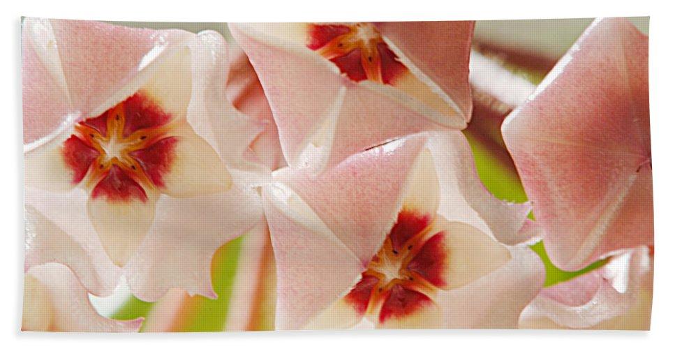Flowers Bath Sheet featuring the photograph Flowers-hoya 1 by Jill Reger