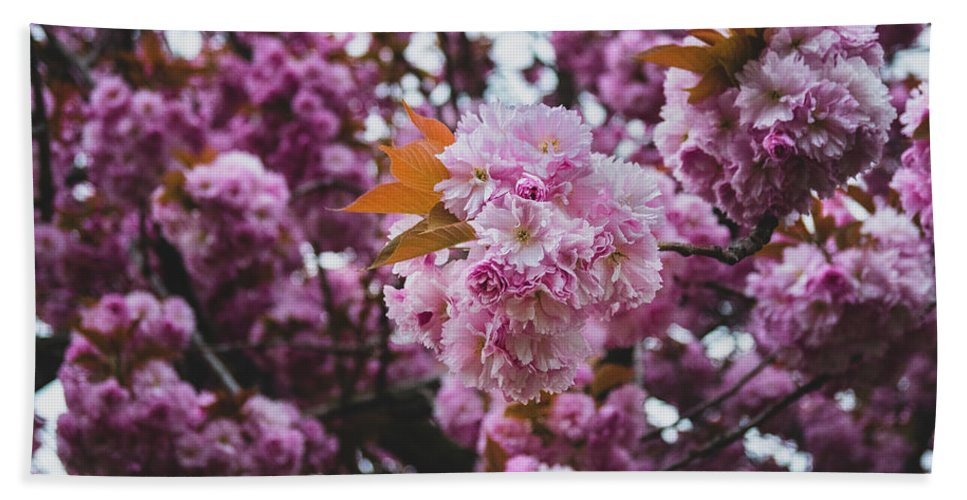 Flowers Hand Towel featuring the photograph Leeds Pink Flower by Ryan Jowitt