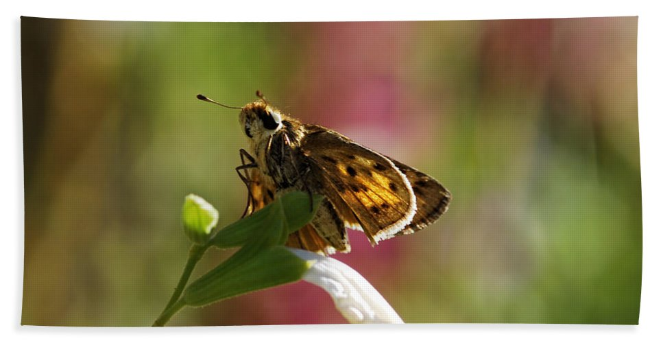 Moth Hand Towel featuring the photograph Flutter by Donna Blackhall