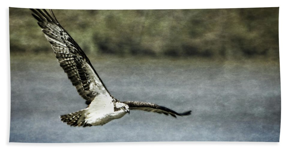 Osprey Hand Towel featuring the digital art Flying Home by Anita Hubbard
