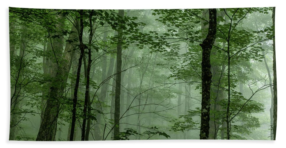 Fog Hand Towel featuring the photograph Fog In The Forest by Louise Lindsay