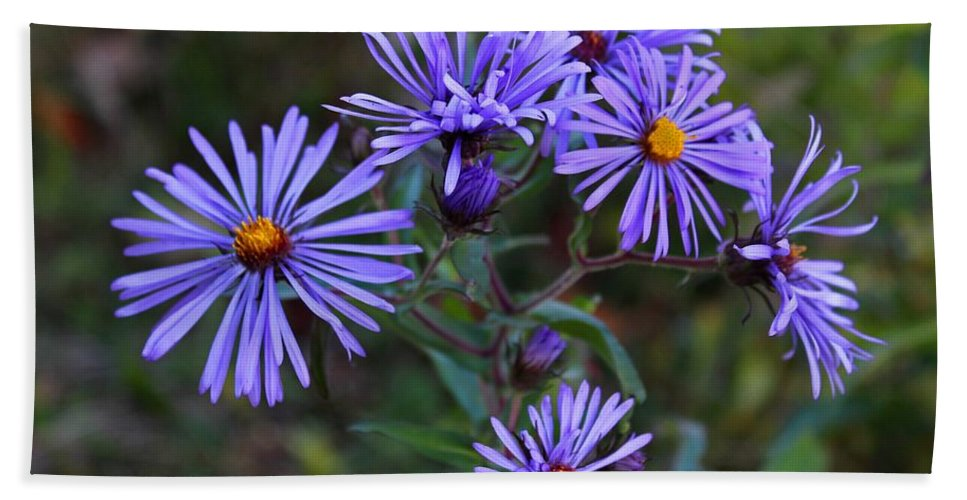 Aster Hand Towel featuring the photograph Fond Memories by Michiale Schneider