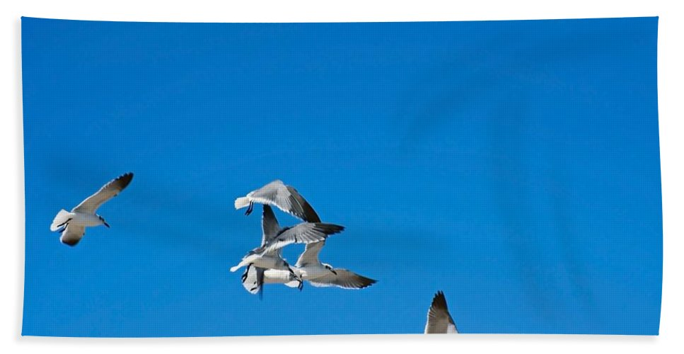Laughing Gulls Gulls Hand Towel featuring the photograph Food Fight by Robert Brown
